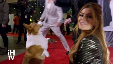 The Beverly Hills Dog Show (NBC) Ashley Tisdale, Shaun White, Maria Menounos & More!