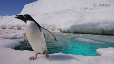 Disneynature's Penguins: Behind The Scenes In Icy Antarctic